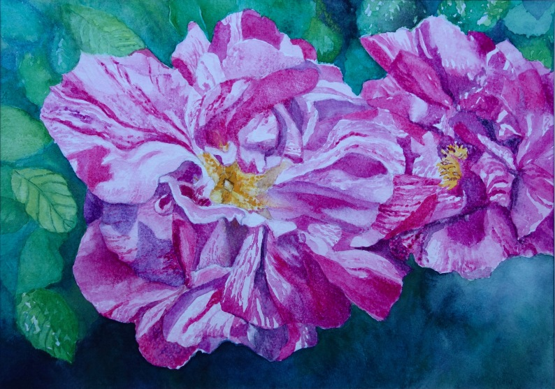 Rosa Mundi - Watercolour